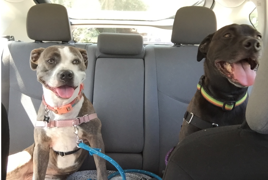 Cooper and Tess! They LOVE car rides!